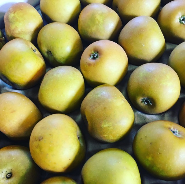 Local Russet Apples