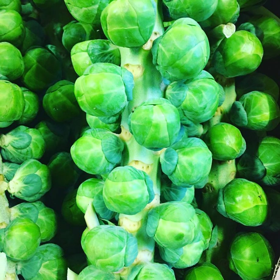 Brussel Sprout Tree